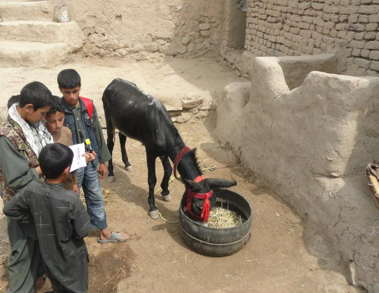 brooke animal hospital, helping donkeys third world countries, working equines