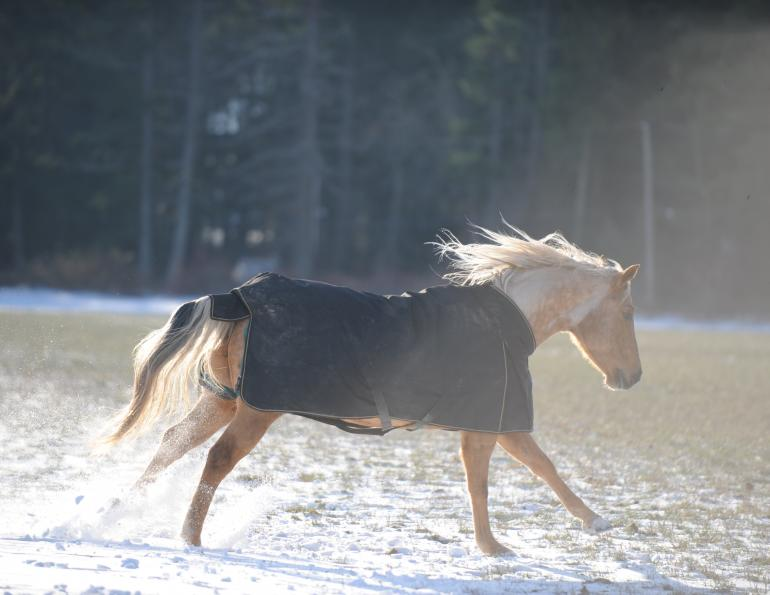 Blanketing Horses in Cold Weather