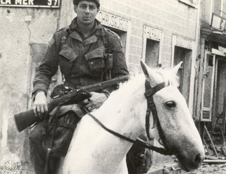 war horse, horses in war, horses in service, world war two horse, world war one horse