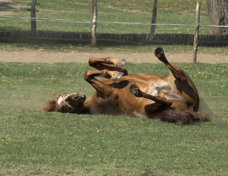 While your horse is enjoying his time of leisure, his regular health and hoof care schedules should be maintained.
