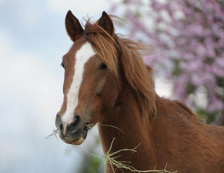 rescue horse Noel was rescued by BC SPCA, noel christmas pony jonathan field, rescue horses