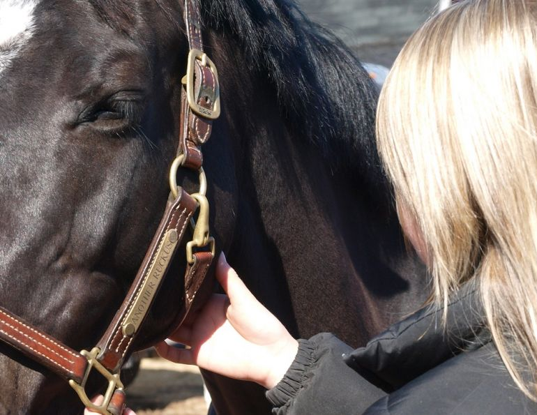 Checking Your Horse's Vital Signs