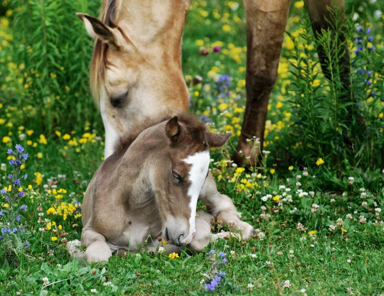 2011 Photo Contest Mare & Foal Category Runner-Up