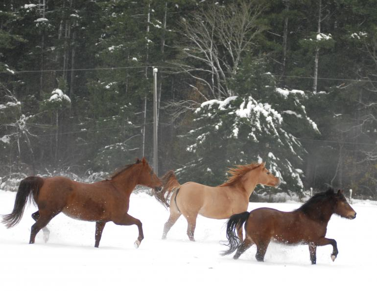 how many calories does my horse need winter, feeding a horse cold weather, how much to water my horse winter