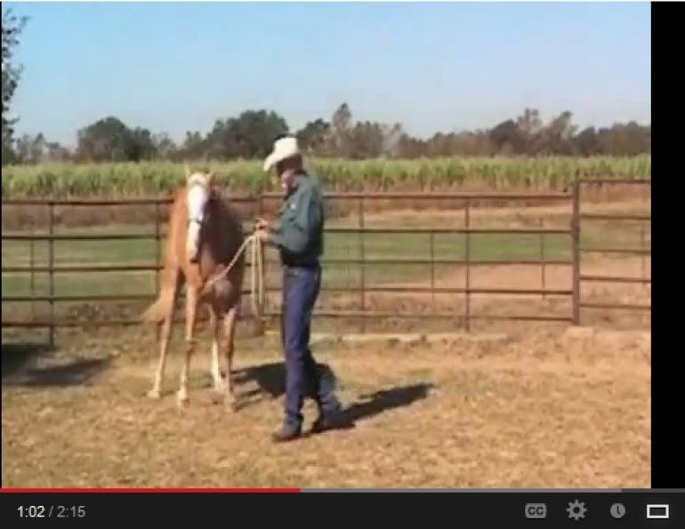 Training Your Horse to Turn for a Showmanship Class