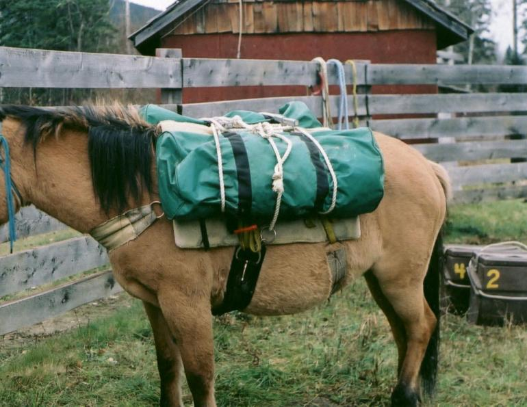 horse camping, packing for horseback trip, packing for horse trail ride, stan walchuk jr