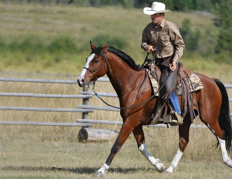 jonathan field, one rein riding for horses, bridleless, halter riding for horses, natural horsemanship, horse obstacle, bridleless canter for horses, bridleless trot for horses, bridleless walk for horses