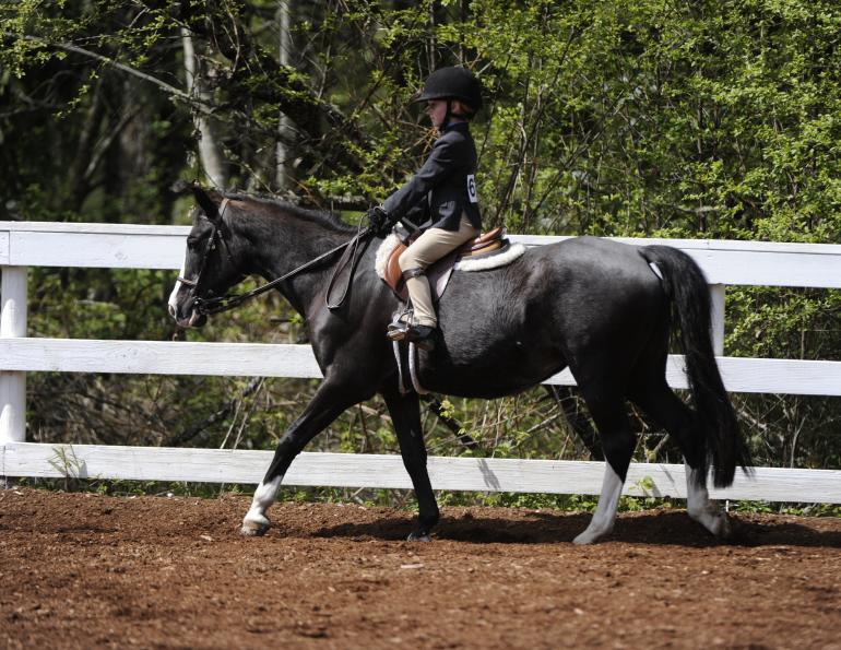 novice horse riders, find someone ride your horse, improve riding skills, lindsay grice