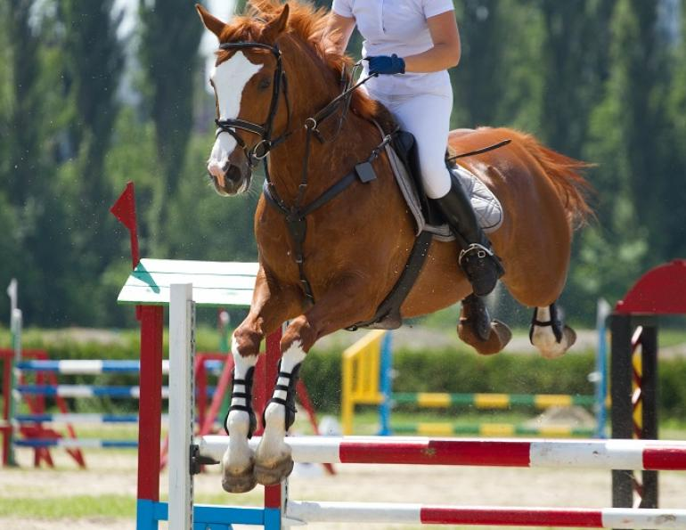 Spirulina  for horse, horse spirulina, horse supplements, horse powerfoods, equien immune, herbs for horses, wendy pearson