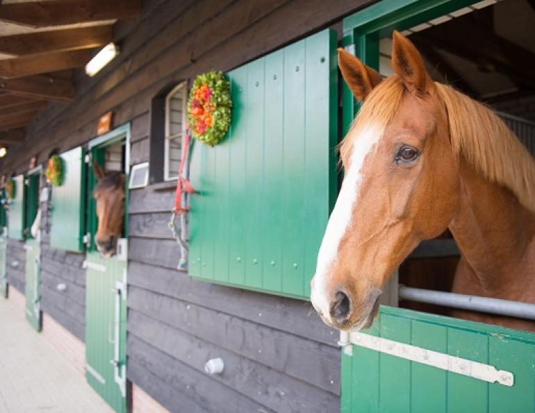 green your barn, eco friendly horse, eco friendly barn, stephanie captein, langley environmental partners society, recycling horse bedding, composting manure