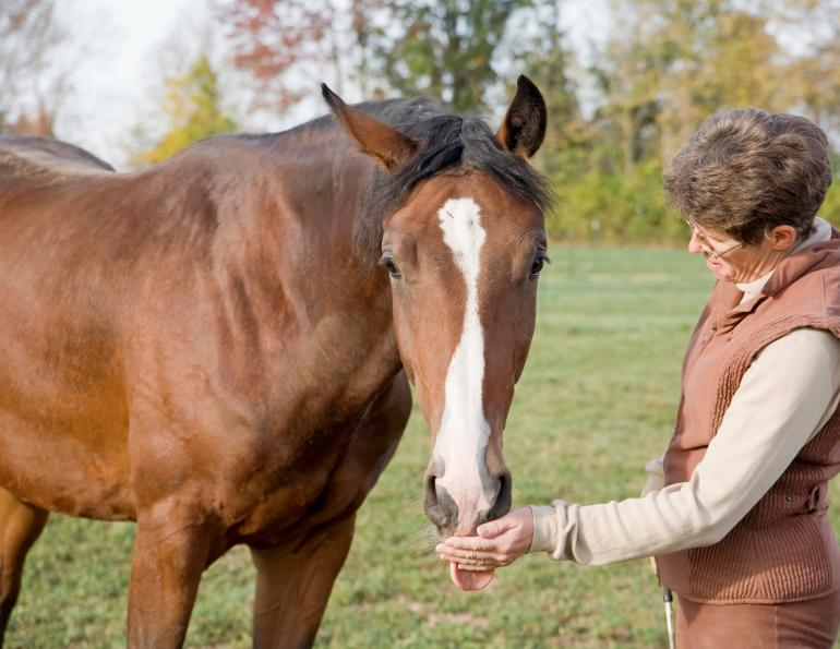 horse psychology equine mark andrews equine cognition, dominant rider, submissive rider