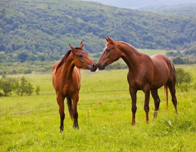 should i rest my horse? Will clining training, how to keep a happy horse, do horses need downtime?