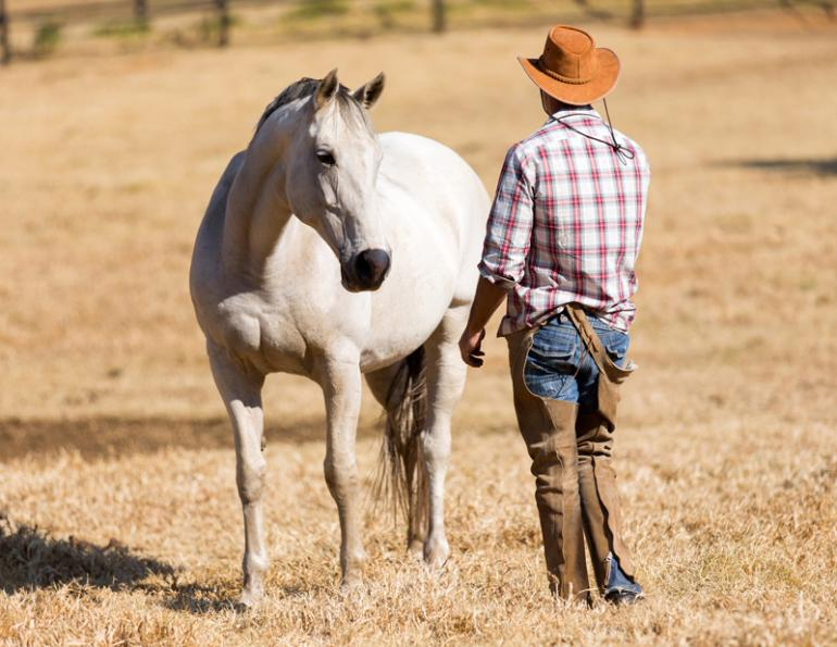 help horse work through confusion, understanding confused Horse, horse aggression, giving proper horse cues, jonathan field