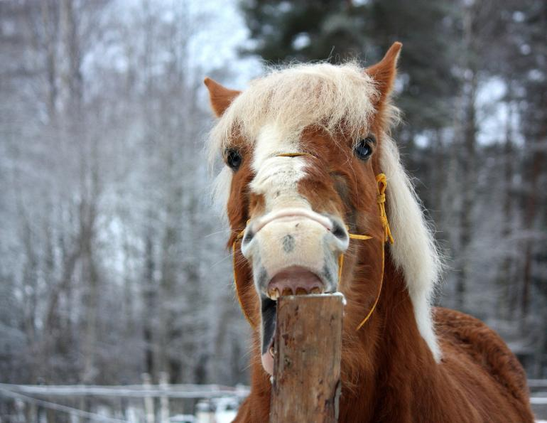 Reduce Horse's Cribbing equine Juliet M. Getty early weaning foals cribbing