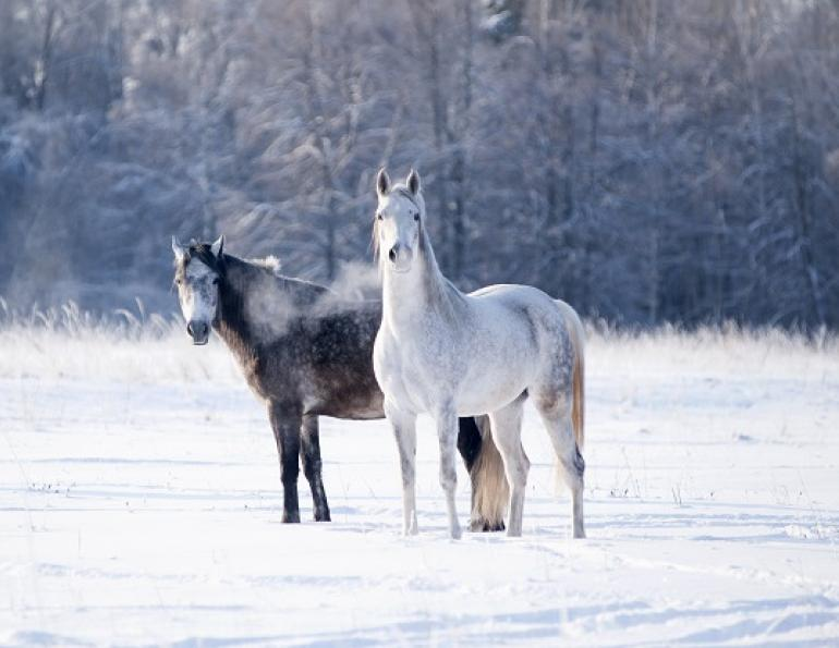 feeding horse in winter, winter horse feeding, low quality hay, water temperature horse, pregnant horse nutrition, foal nutrition