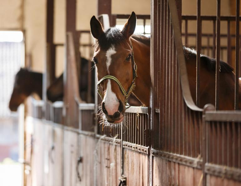 Music Helps Horses, equine music therapy, horse music therapy, polish equine research, soft music helps horses, janet marlow pet acoustics, dr. juliet m. getty phd, music therapy for horses