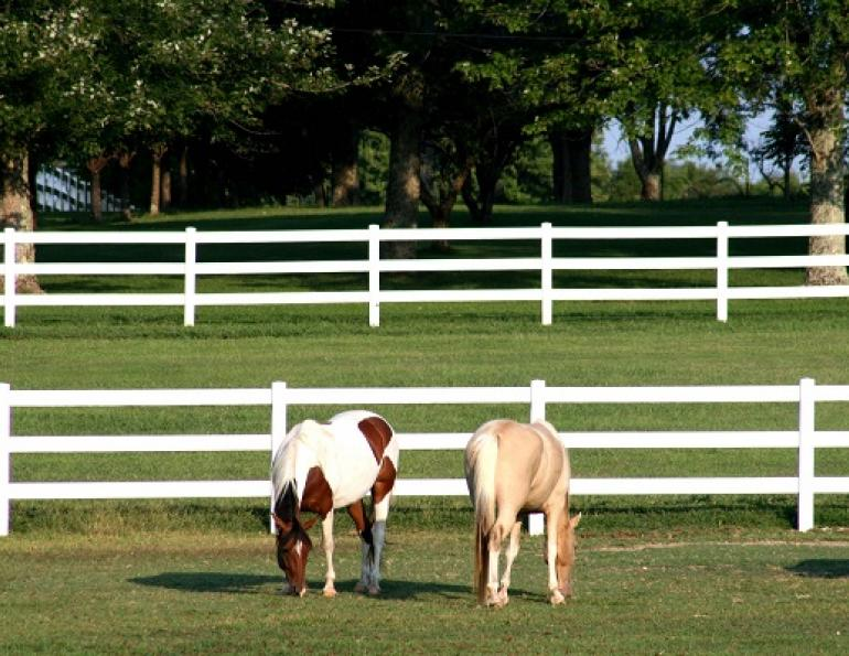 horse fencing, equine fencing, ferris fencing, system fencing, gardner fence, cf fence, woodguard fence, electric fencing, vinyl fencing, wire fencing, build horse fence