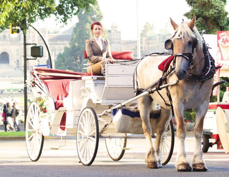 Carriage Horses, Tally-Ho Carriage Tours, Anton Henderson, Robert Carriages Inc., Donna Friedlander, horse jobs, equine jobs
