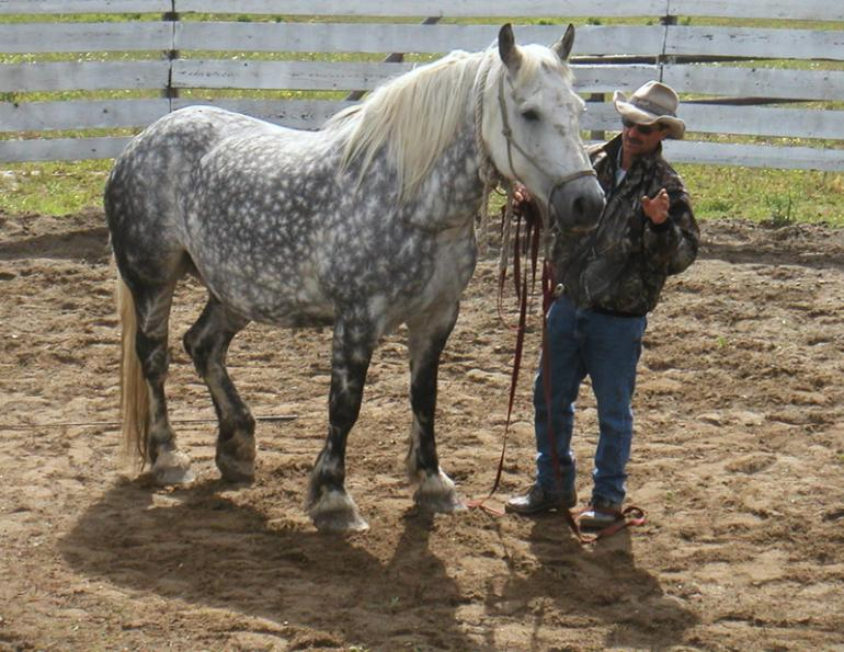horse trail riding tips, young trail riding horse