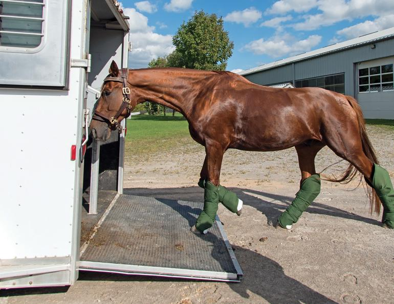 choosing a commercial transporter, how to transport a horse, commercial horse transporters canada, kevan garecki, transport for a special needs horse