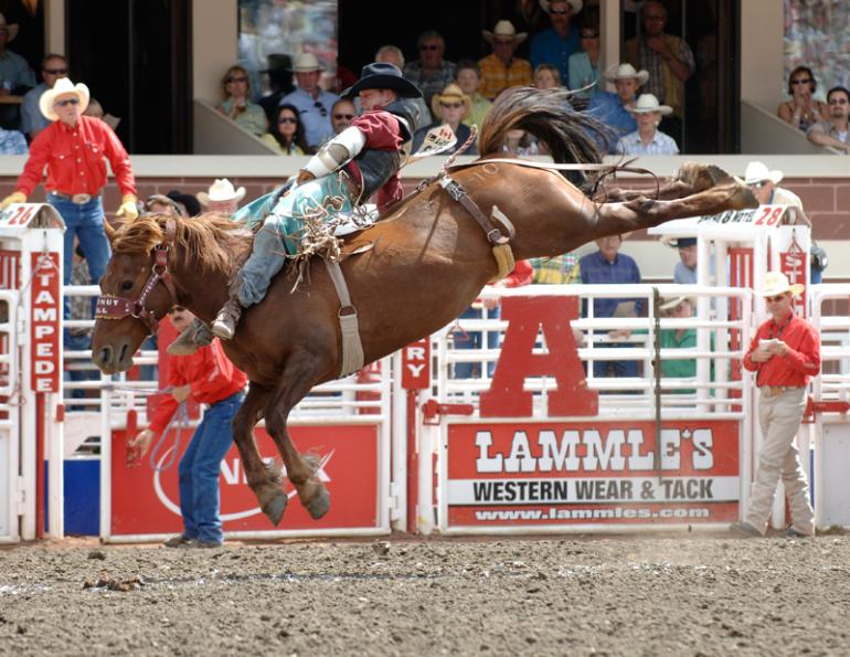 Coconut Roll horse, bareback competition horse coconut roll, rodeo stock contractor, coconut roll