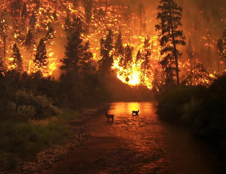 wildfire prepared, flood prepared, earthquake prepared, Fort McMurray fire, emergency evacuation, natural disasters, emergency preparedness plan, returning home after natural disaster, horse ID, horse safety