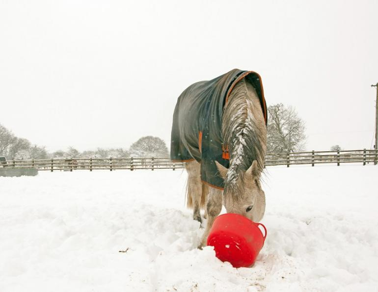 equine nutrition, horse nutrition, feeding horses, supplementing horses, horse far, fat to horse diet, equine fat diet