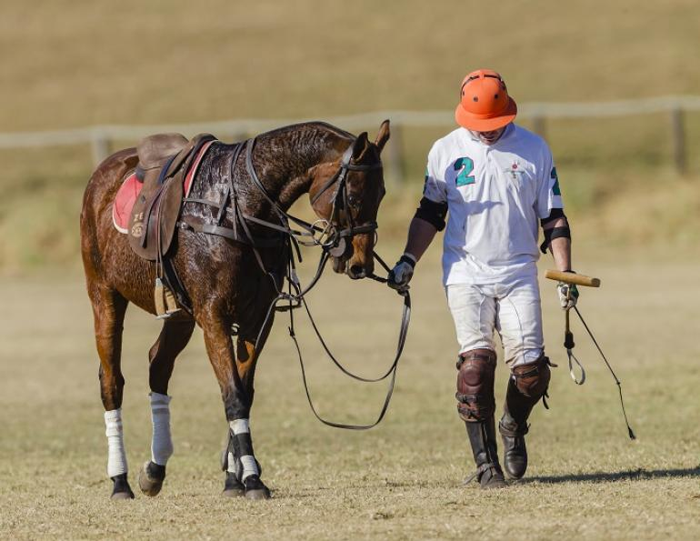 Equine Tying Up Syndrome, pssm, rer, polysaccharide storage myopathy recurrent exertional rhabdomyolysis Fabienne Uehlinger Western College of Veterinary Medicine WCVM