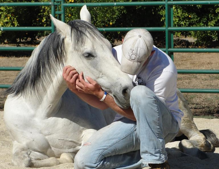 Horses as Healers, Margaret Evans, Spirit Gate Farms, Horses helping people coping with post-traumatic stress disorder ptsd, Horses increase self-awareness, Horses teach importance good communication respect, horses bring people together, horses mirror human body language