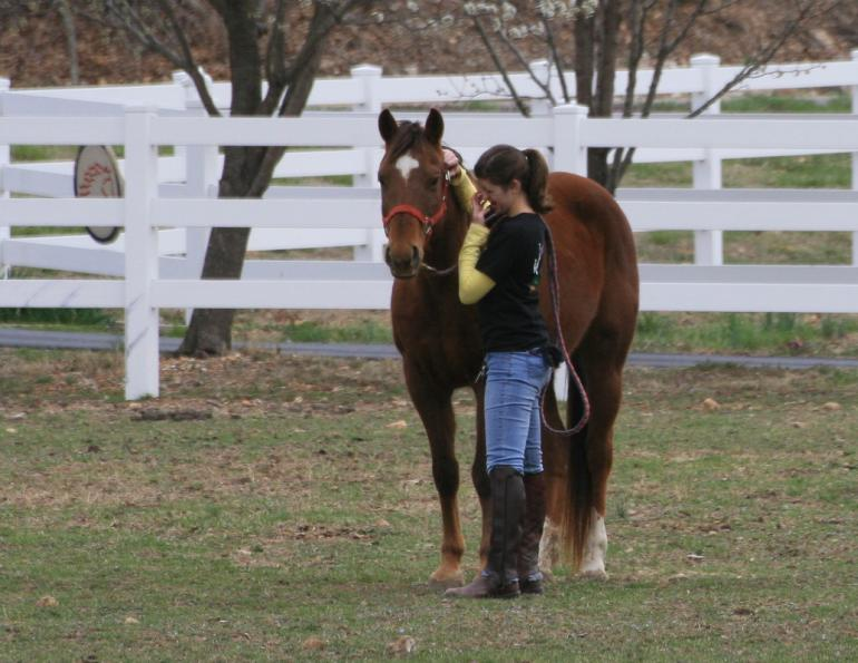 The Real Cost of Horse Ownership
