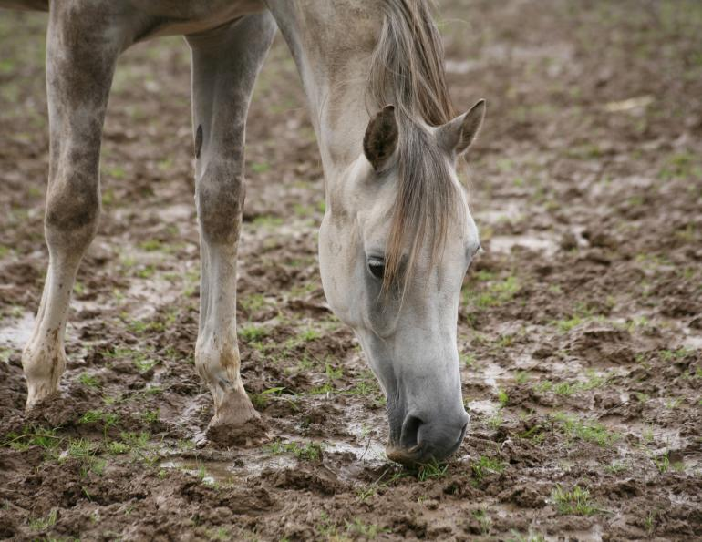 mud fever horses, equine mud fever, supplements for equine mud fever, vetcur, stone hedge farms, Cur1, DiVet, ImVet