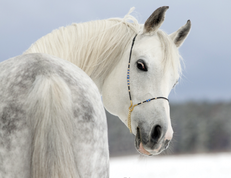 equine gift guide, horse gift guide, abby saddle shop, econets, haybag, abby saddle, ferris fencing, muds boots, noble outfitters, big d, slow feed netting, ecolicious, hi-hog, tom balding, econets, canadian horse journal, kix n bux, paddock tack, stampede tack, jacks gloves, hoofjack