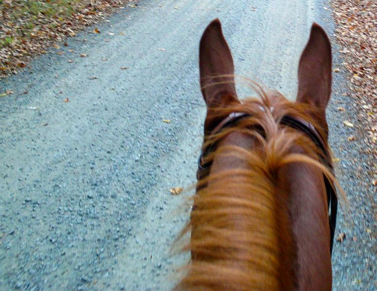 horse instincts reactions vs. Response, teaching your horse controlled responses, teach horse overcome bad habits,
