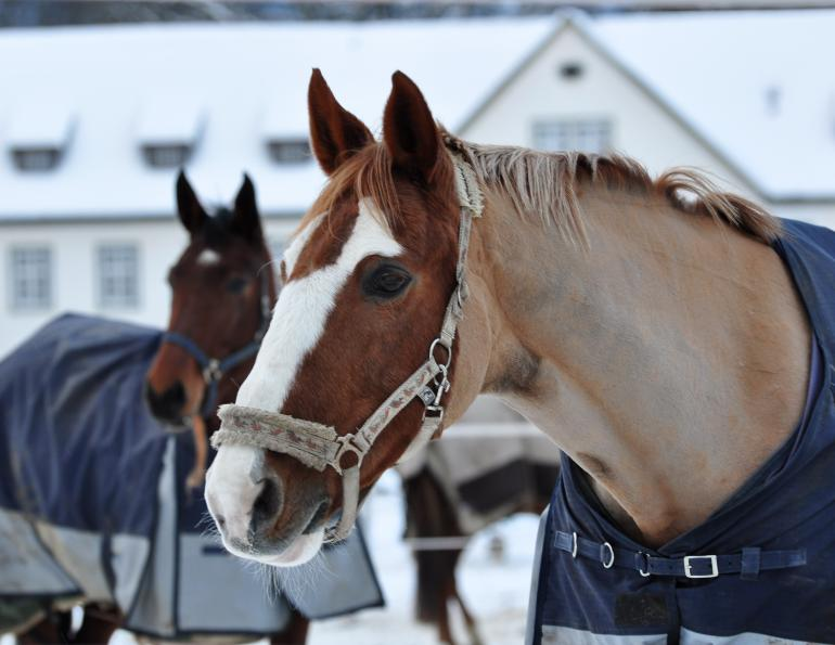 should i give bute to my horse? should i give my horse msm? how to help my horse's arthritis?