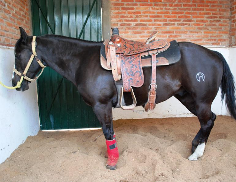 Horse Training Tips, get horse stand quietly when tied, horse standing still in cross ties,
