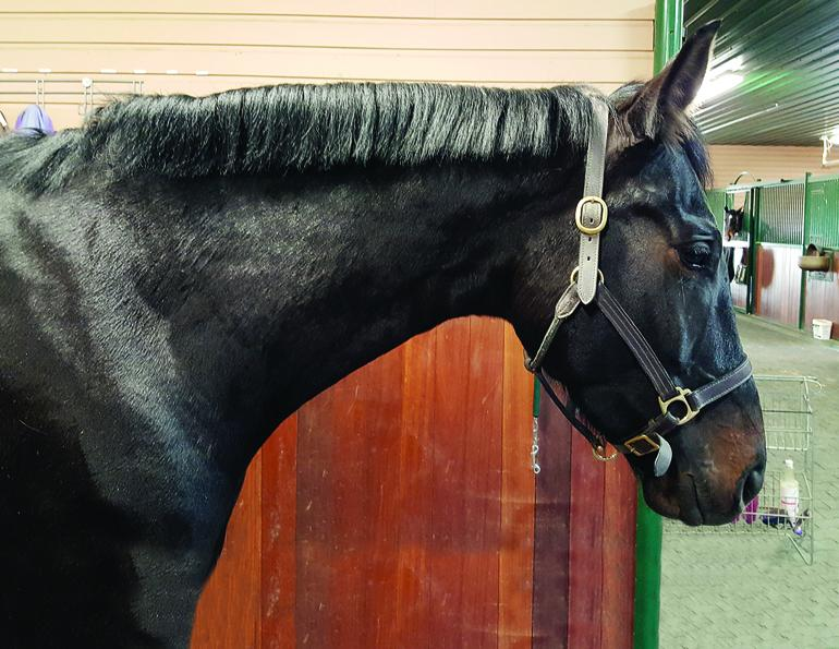 HOW TO Shorten a horse's Mane trimming horse's mane with scissors horse grooming horse mane grooming