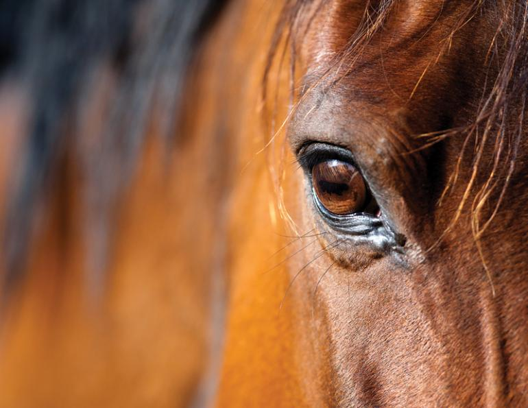 Equestrian Canada, Equine Canada, Canadian horse industry, Canada's Horse Industry, Canadian Horse Industry Profile Study, Roz Moskovits, Howard Jackson, Les Burwash, Sabine Schleese, changing canadian horse industry