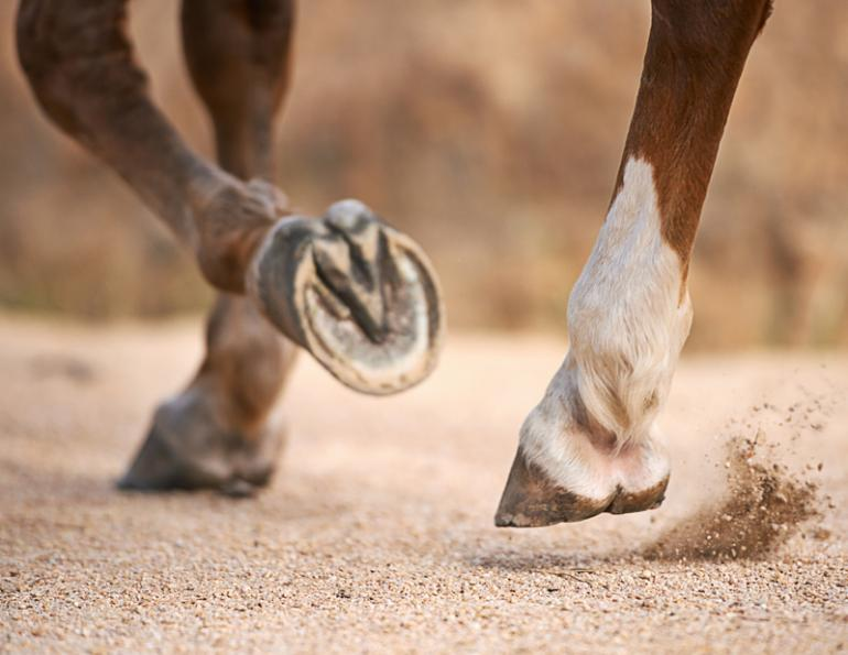 hoof care, barefoot horses, shod horses, American Association of Equine Practitioners, AAEP, equine athlete, fit horses, horse competition