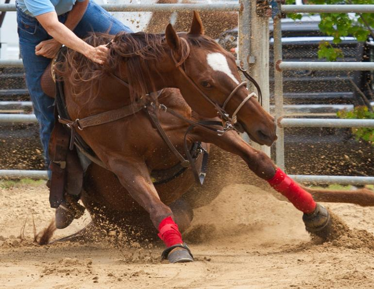 horse rider injuries, accident-prone horse rider, alexa linton horse person, how to help an injured horse rider