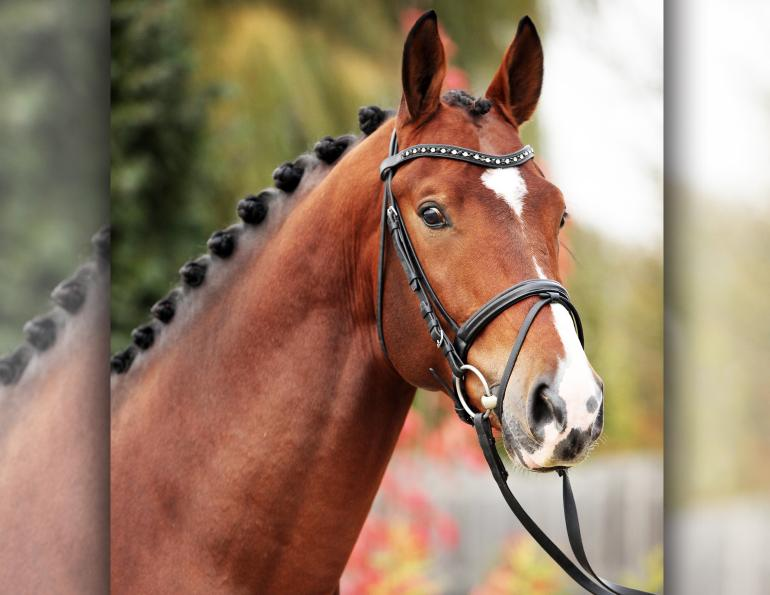 arenus secure guard gold, arenus assure, equine digestive system, supplements for horses, feed to prevent horse colic