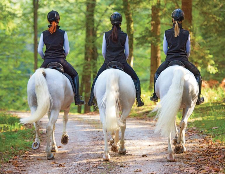 how to increase equine pelvis stability, how to improve pelvis range, how to strengthen pelvic floor, what is Equine osteopathy