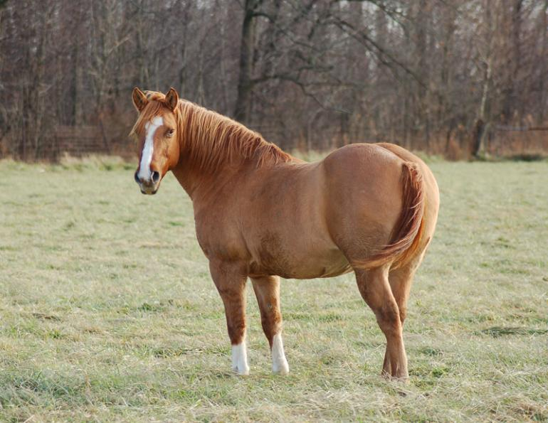 Jackie Bellamy-Zions, equine gut microflora EMS warning, horse care, laminitis, fecal microbial, equine metabolic syndromes, Dr. Scott Weese