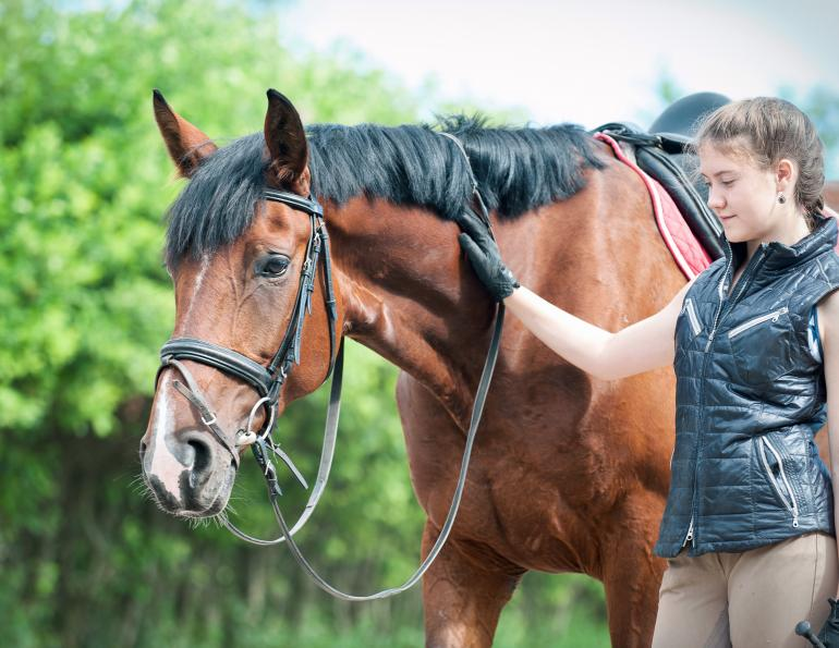 how to buy a horse, horse pre-purchase exam, equine pre-purchase exam, shopping for a horse, horse shopping, sellng a horse