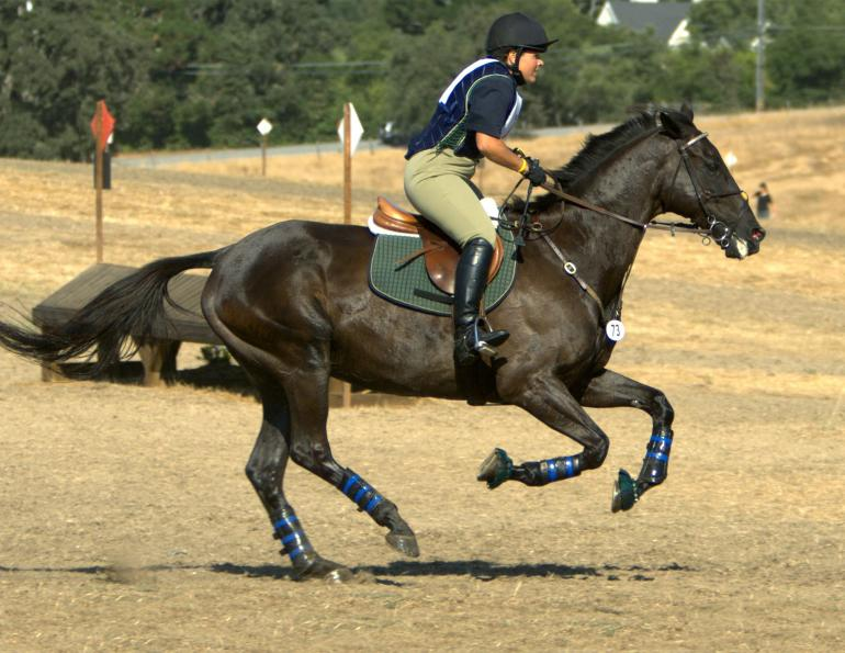 joint supplements horse, equine joint pain, actistatin equine