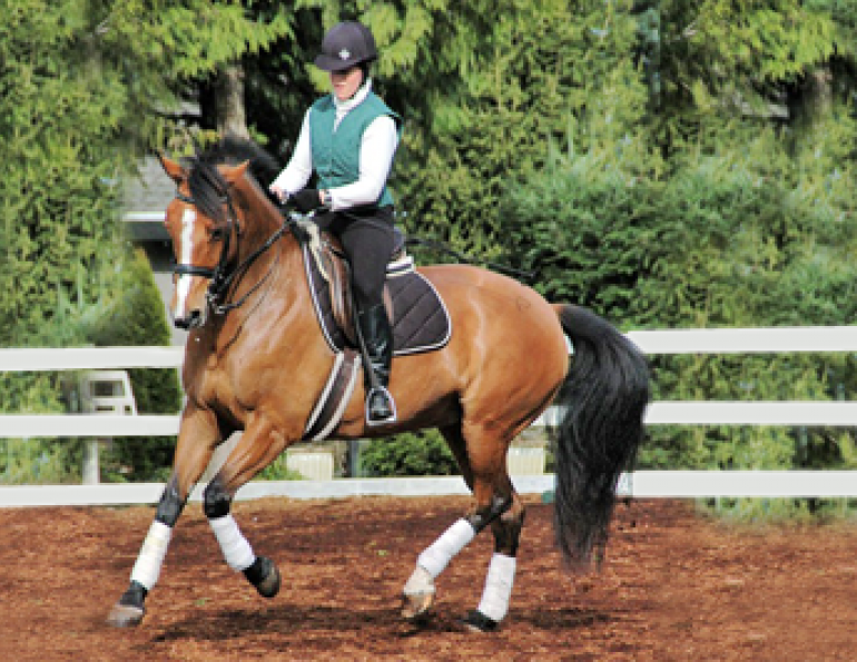 horse arena routines, jec aristotle ballou, arena diamond, balanced horse, balancing your horse, horse flexion, equien sacroiliac joint, riding ground poles, dressage exercises, equine fitness