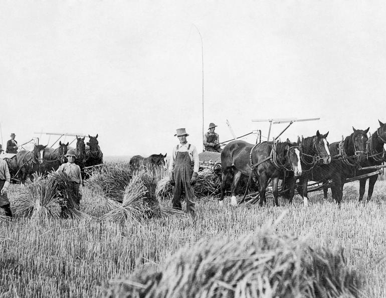 History of the Draft Horse: The Muscle-Men of the Horse World | Horse  Journals