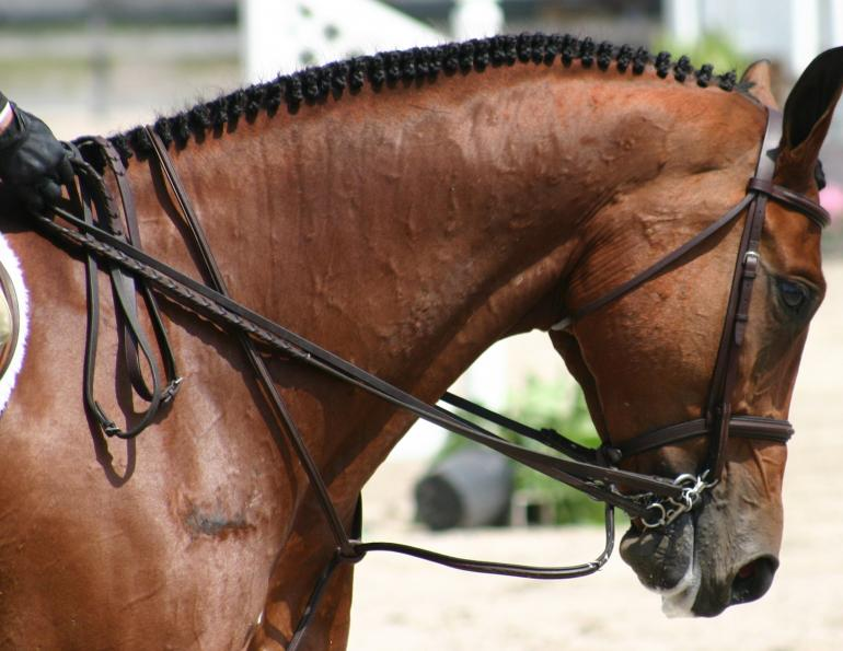 Braid And Band Your Horse S Mane Like A Professional