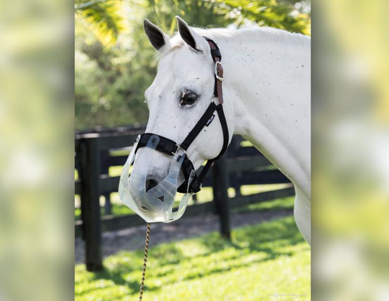 thinline flexible filly muzzle, nice horse muzzles, best horse muzzles, thinline canada
