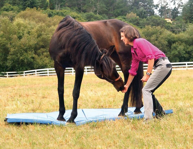 horse stretches, carrot stretches horses, help horse supple, jec ballou, groundwork for horses