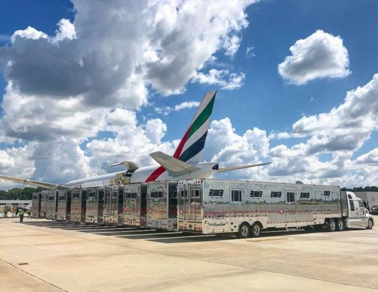 A new study will investigate how to optimize the welfare of horses being transported by air. Horses are among the most travelled domestic species, and although there has been plenty of research into road travel, less is known about how they cope with travelling by air.